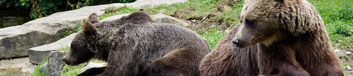 Ursos em repouso